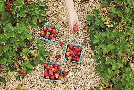 BIO potraviny a ekologické zemědělství