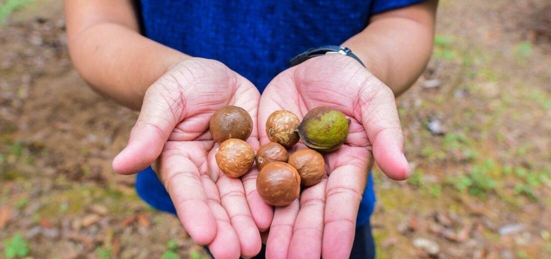 Úroda ořechů v roce 2020/2021