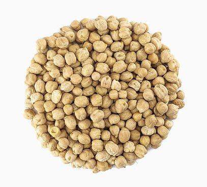 Cizrna semínka na klíčení