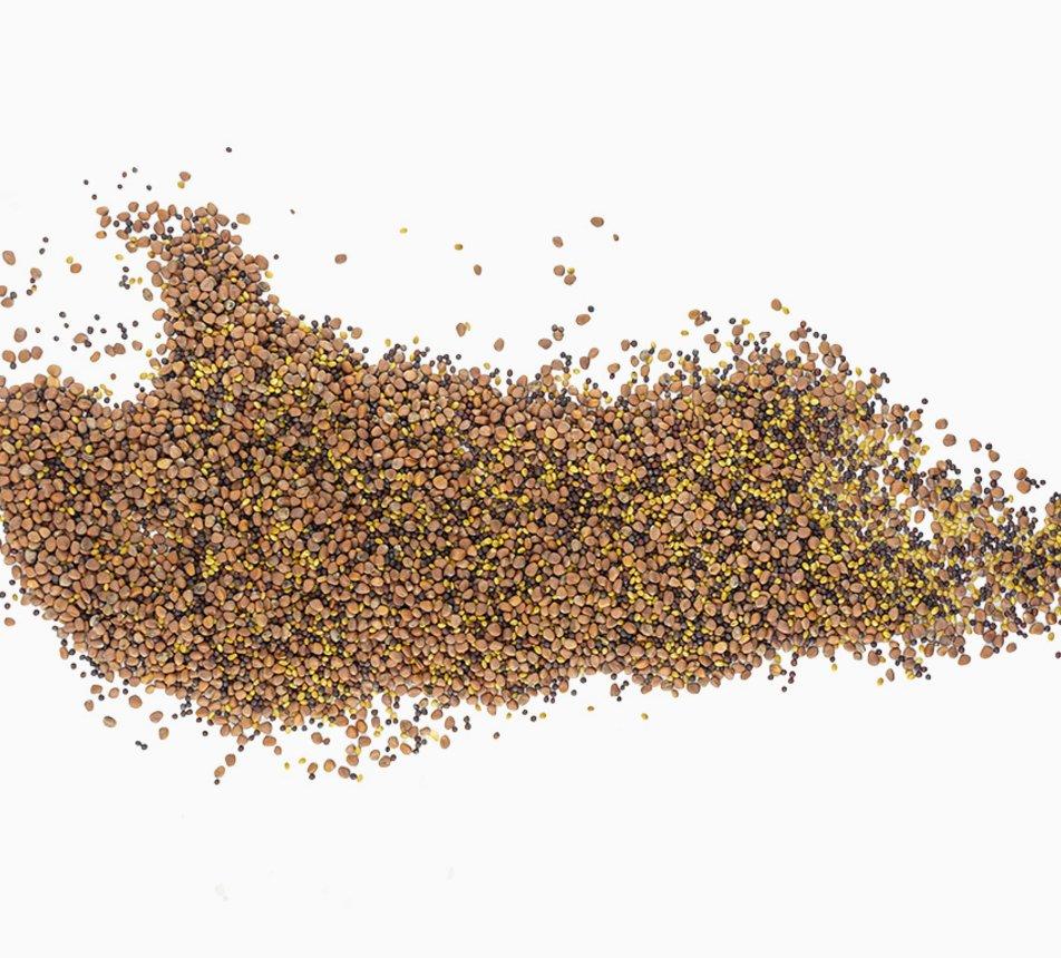 Semínka na klíčení