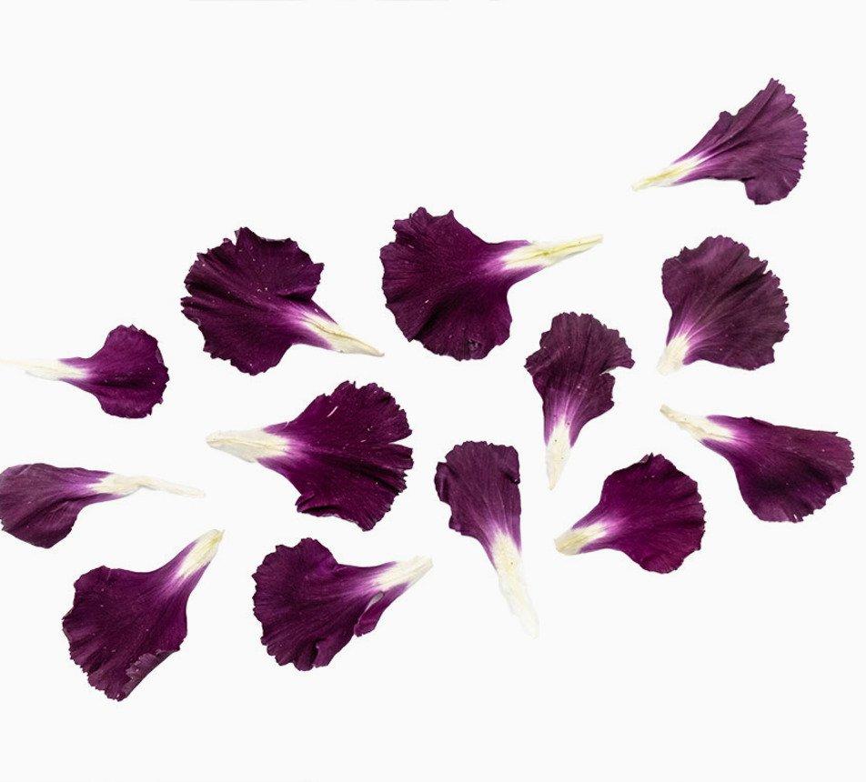 Jedlé fialové květy karafiátu