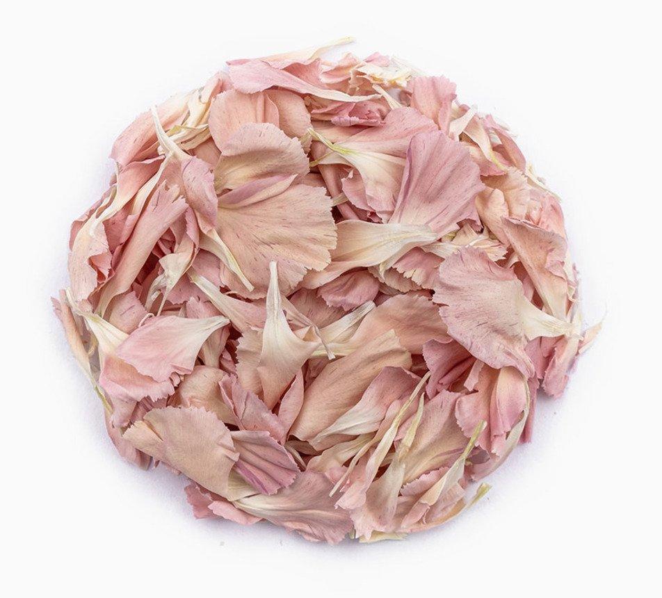 Jedlé růžové květy karafiátu