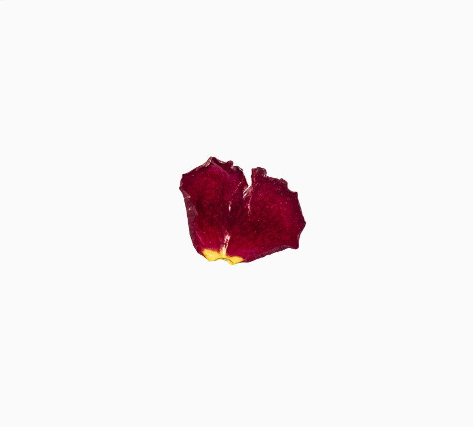 Jedlé malé květy růže 4 image