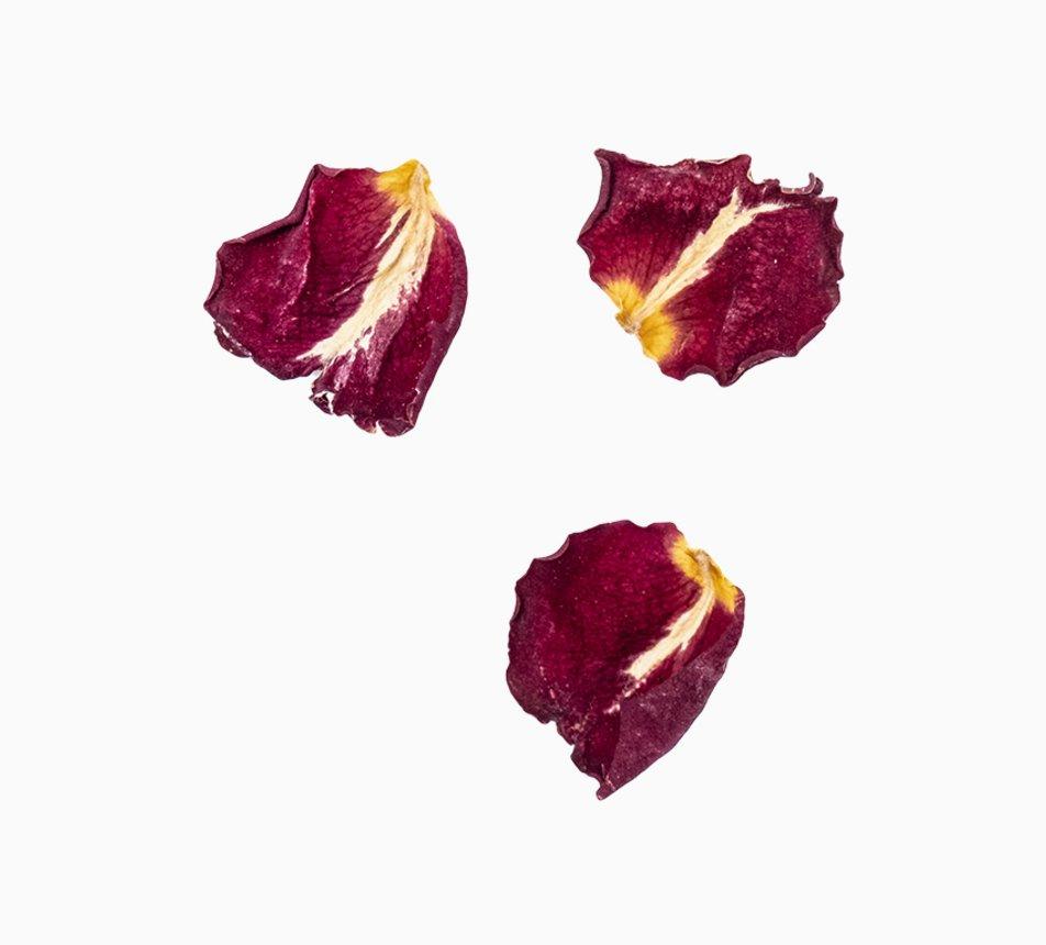 Jedlé malé květy růže 5 image