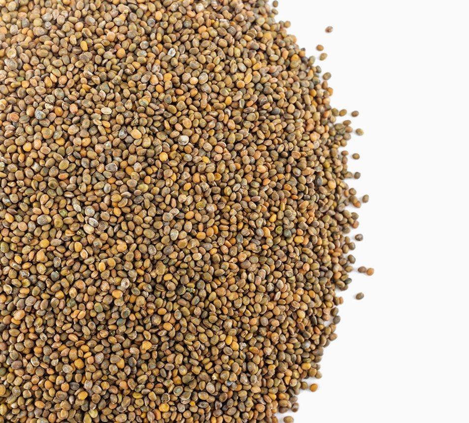 Rukola semínka na klíčení